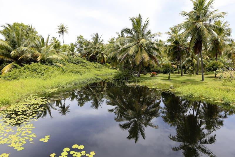 Tropiskt landskap fotografering för bildbyråer