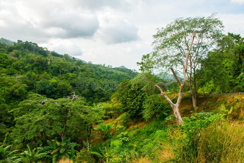 Tropiskt landskap av djungeln av Koh Samui Island, Thailand fotografering för bildbyråer