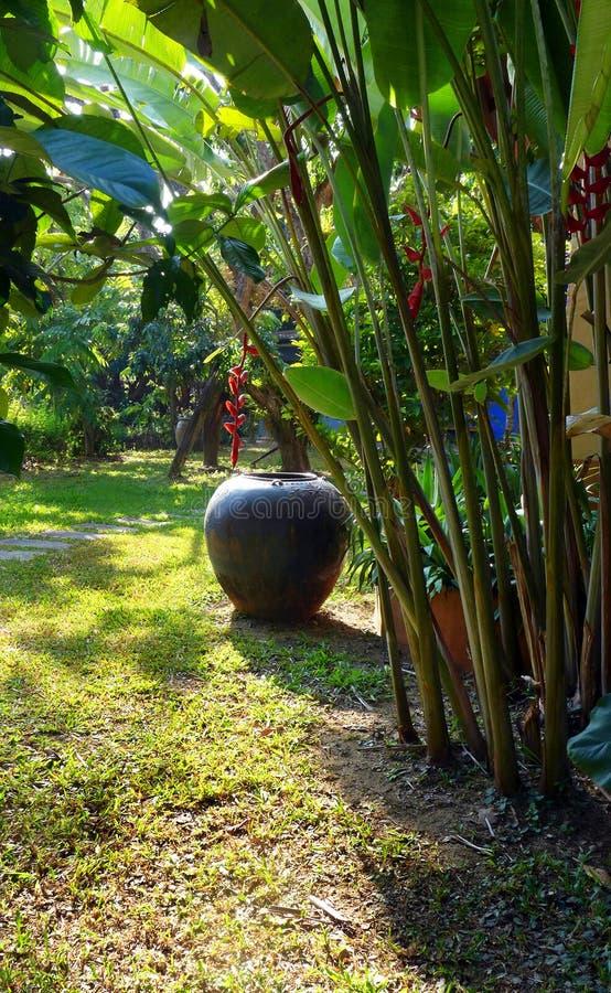 Tropiskt landskap för trädgård fotografering för bildbyråer