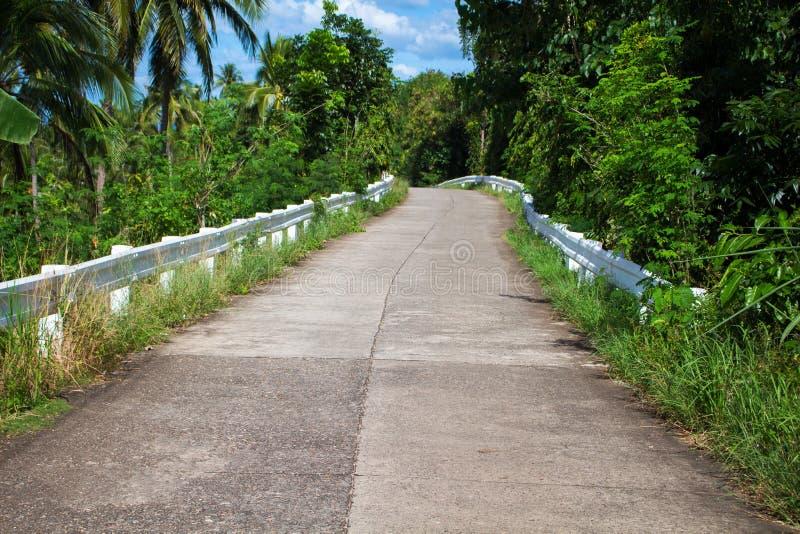 Tropiskt landskap med den tomma vägen och gräsplanvägrenen Vändkretsskoglopp med cykeln arkivfoto