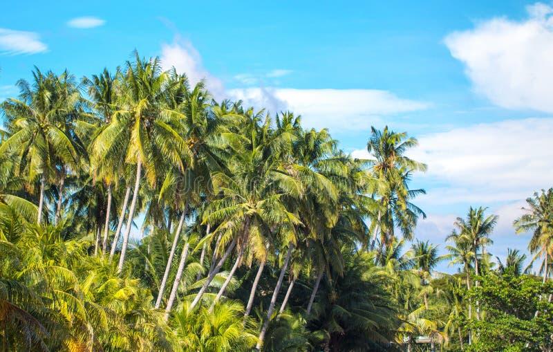 Tropiskt landskap med palmträd och blå himmel Lopp i exotiskt ställe royaltyfri bild