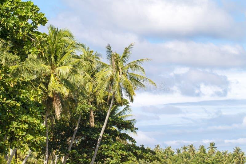 Tropiskt landskap med palmträdet och molnig himmel Utomhus- lopp i exotiskt ställe arkivbilder