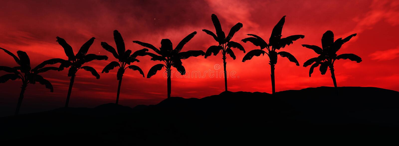 Tropiskt landskap, strand med palmträd på solnedgången arkivbild