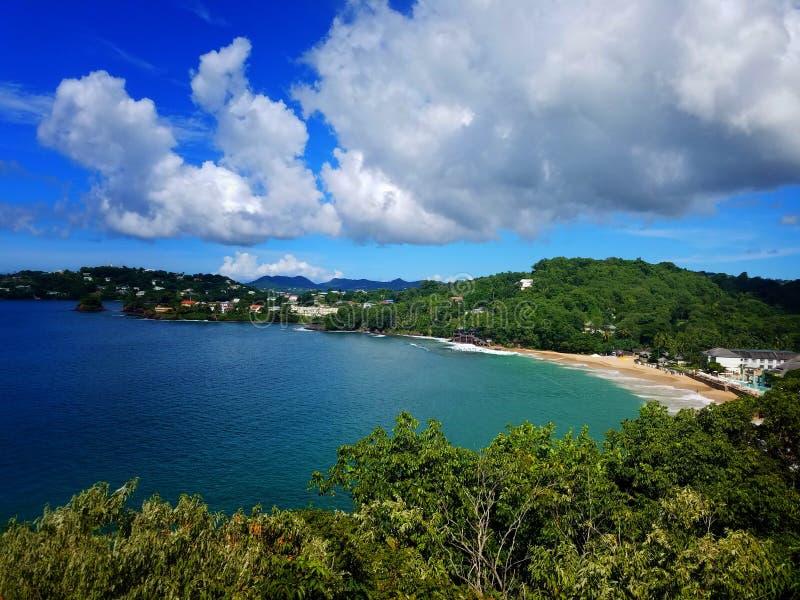 tropiskt lopp fotografering för bildbyråer