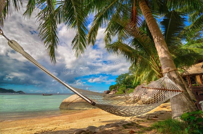 Tropiskt paradis - hängmatta mellan palmträd på sjösidan på en tropisk ö arkivbilder
