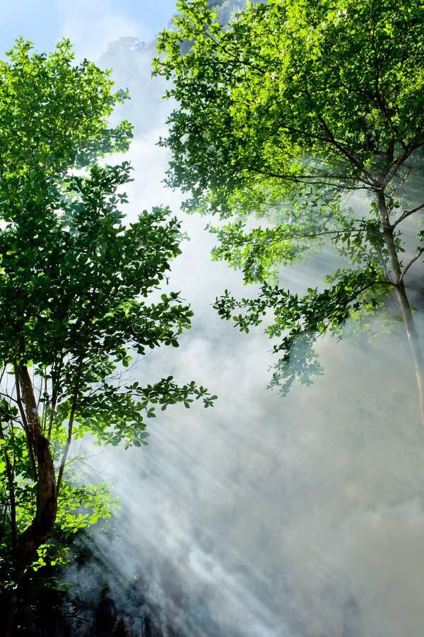 Download Tropiskt skoglandskap arkivfoto. Bild av vertikalt, brigham - 19792540
