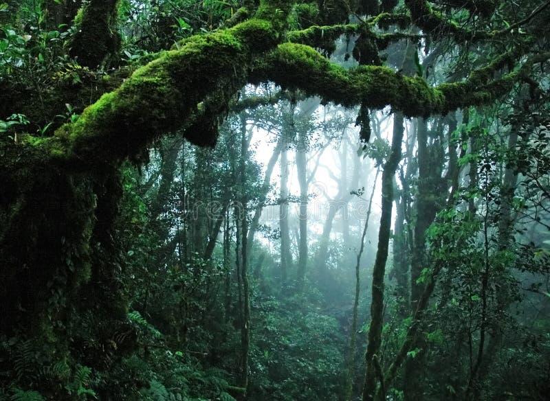 tropiskt skogregn royaltyfria bilder