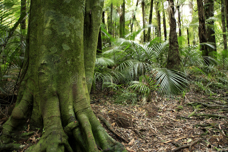 tropiskt skogregn arkivfoton