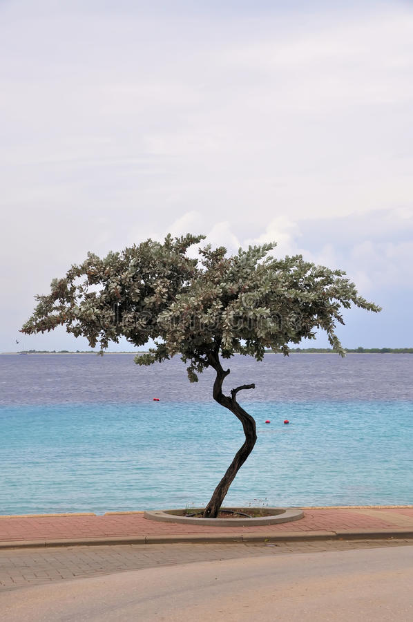 tropiskt vatten för krokig tree royaltyfri bild