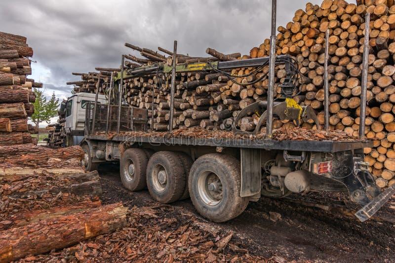 Troquez le bois de chargement dans un entrepôt extérieur en bois de pin photos stock