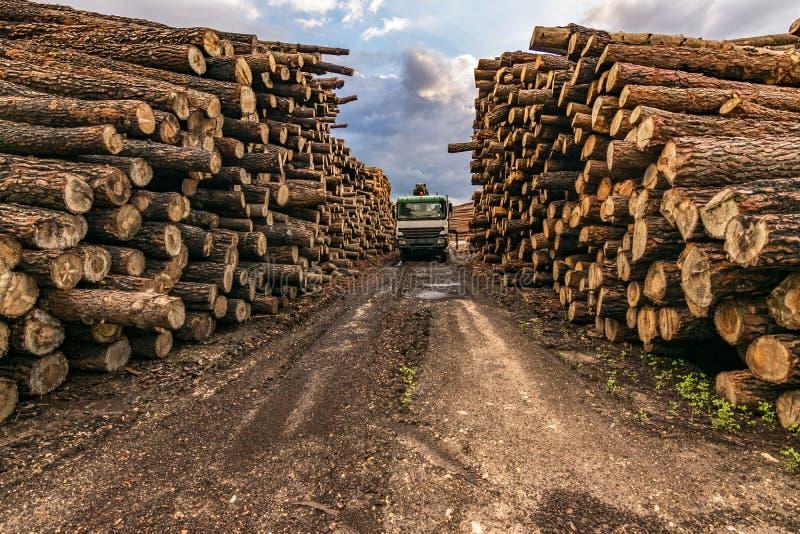 Troquez le bois de chargement dans un entrepôt extérieur en bois de pin images stock