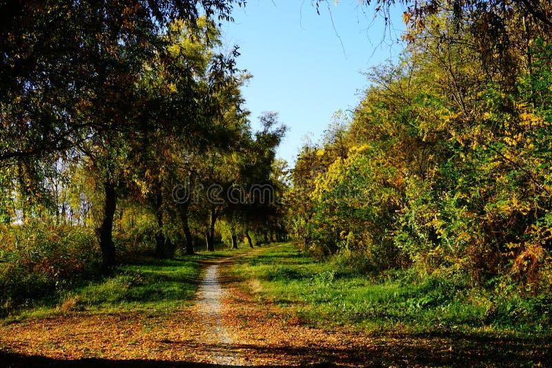 Troszkę droga przez lasu zdjęcia stock