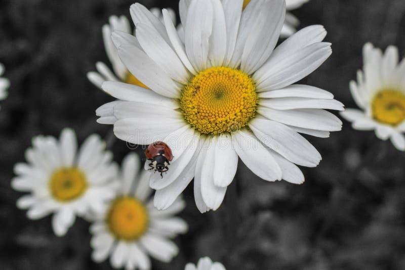 Troszkę ściga na lato kwiacie fotografia stock