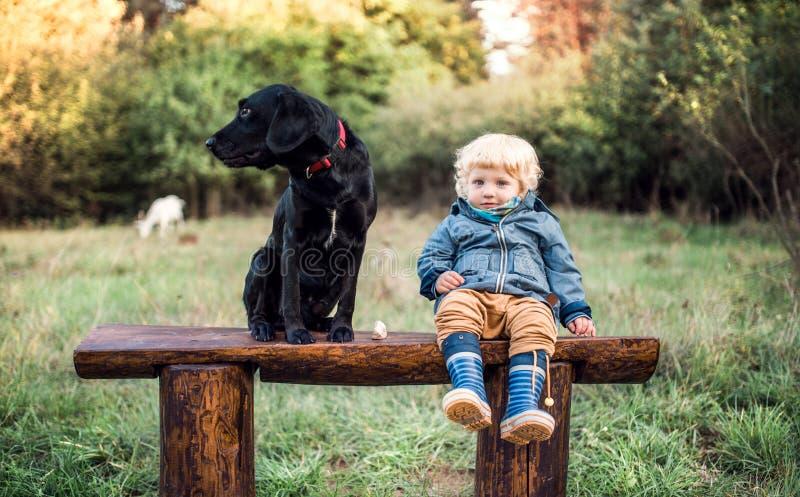 Troszkę berbeć chłopiec outdoors i pies na drodze przy zmierzchem zdjęcia stock