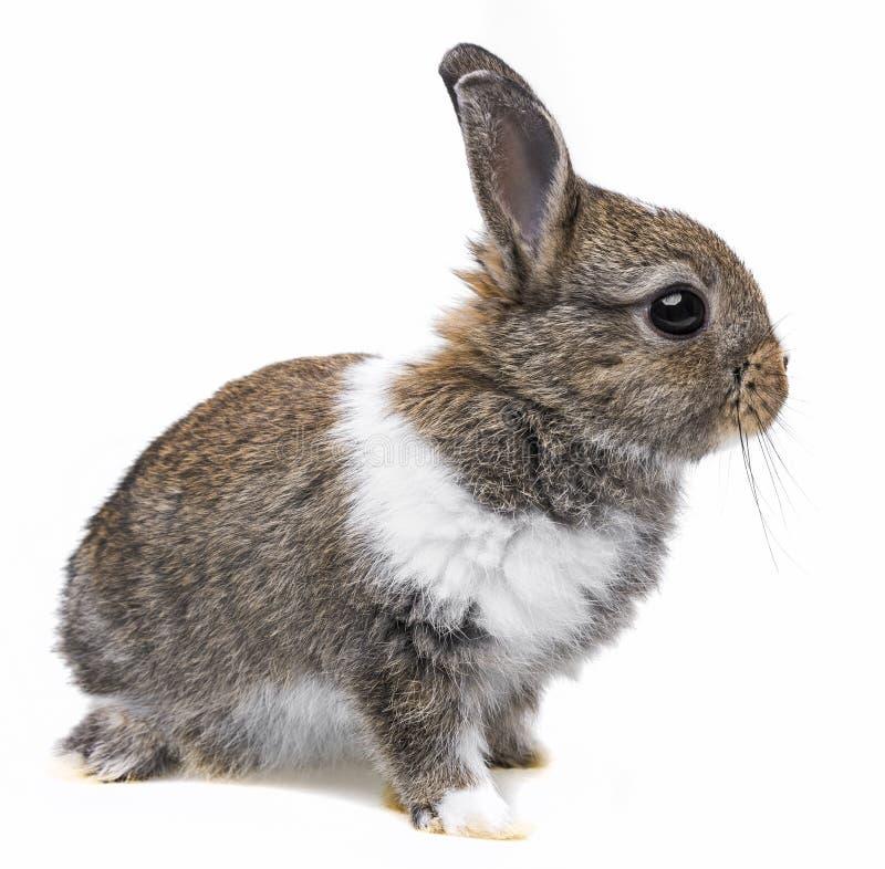 Troszkę dziecko królik fotografia stock