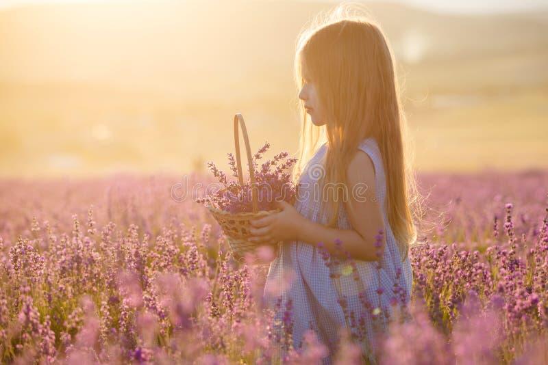 Troszkę dziewczyna z koszem w lawendowym polu obraz royalty free