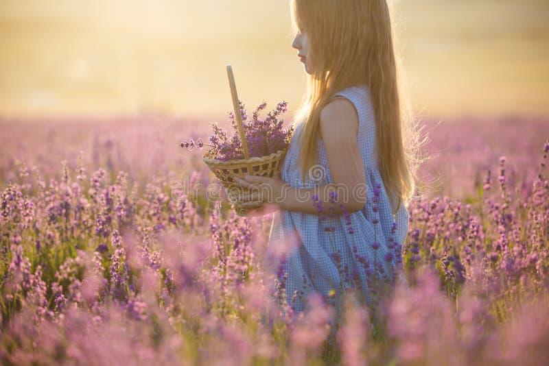 Troszkę dziewczyna z koszem w lawendowym polu zdjęcie stock