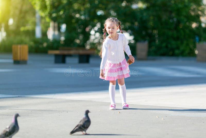 Troszkę karmi gołębie dziewczyna obrazy royalty free
