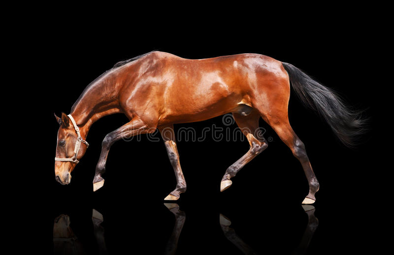 Trot D Isolement Image stock