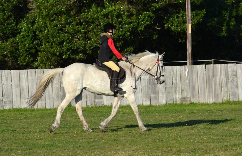 Trot de monte sur le cheval gris photos libres de droits