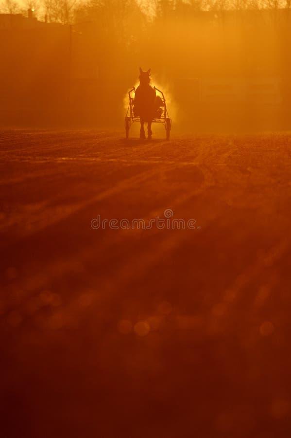 Trotador na arena fotos de stock royalty free