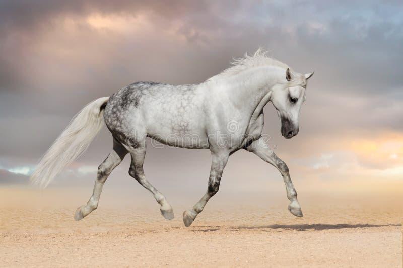 Trote do cavalo foto de stock