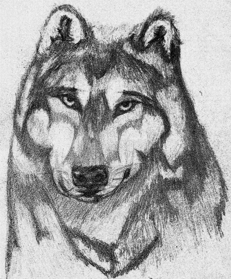 Trotse Wolf stock fotografie