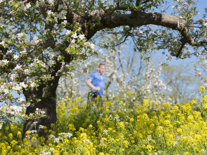 Trotti dell'uomo vicino ai fiori della molla ed al fiore della mela in Olanda il giorno di molla soleggiato fotografia stock libera da diritti