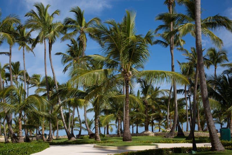 Trottoar som omges från palmträd i det karibiskt arkivfoto