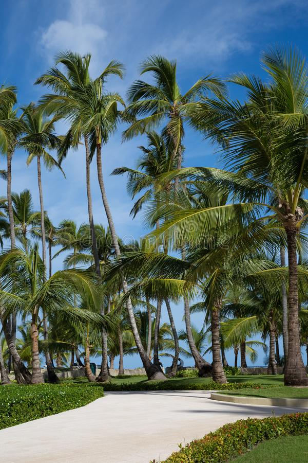 Trottoar till stranden som omges från palmträd med en blå himmel arkivfoton