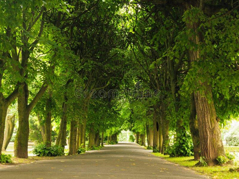 Trottoaren som går trottoar parkerar in äpplet clouds treen för sunen för naturen för blommaliggandeängen arkivfoton