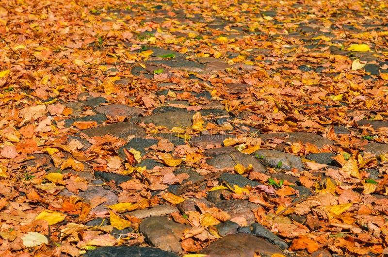 Trottoir de pavé rond avec des feuilles d'automne Le concept de changer la saison Jour d'automne Type de cru images stock