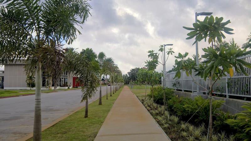 Trottoir de voie avec des arbres image libre de droits