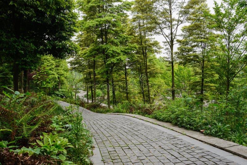 Trottoir en pierre sur des bois de flanc de coteau au printemps photo libre de droits