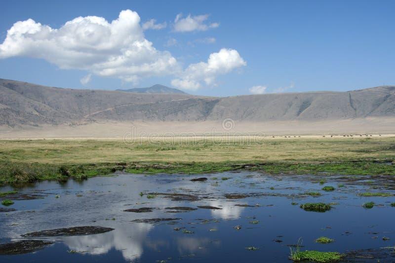 Trou d'arrosage - cratère de Ngorongoro, Tanzanie, Afric photo stock