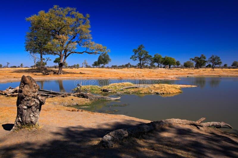 Trou d'eau en Afrique Ladscape africain de Tipical avec le ciel bleu-foncé Lac water au Botswana Arbres avec l'étang photographie stock