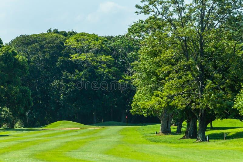 Trou scénique d'arbres de terrain de golf images libres de droits