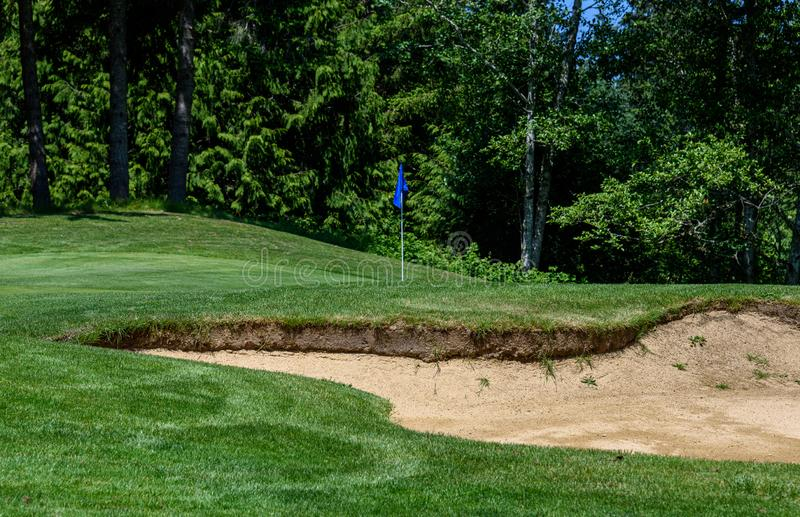Trouble on the golf course, sand trap protecting a golf green with trees in the background royalty free stock images