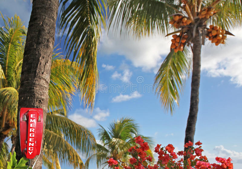 Trouble in Paradise royalty free stock photography