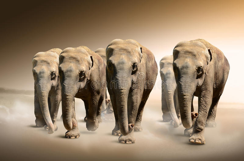 Troupeau d'éléphants photographie stock