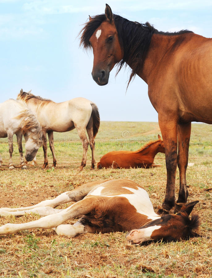 Troupeau de chevaux photo stock