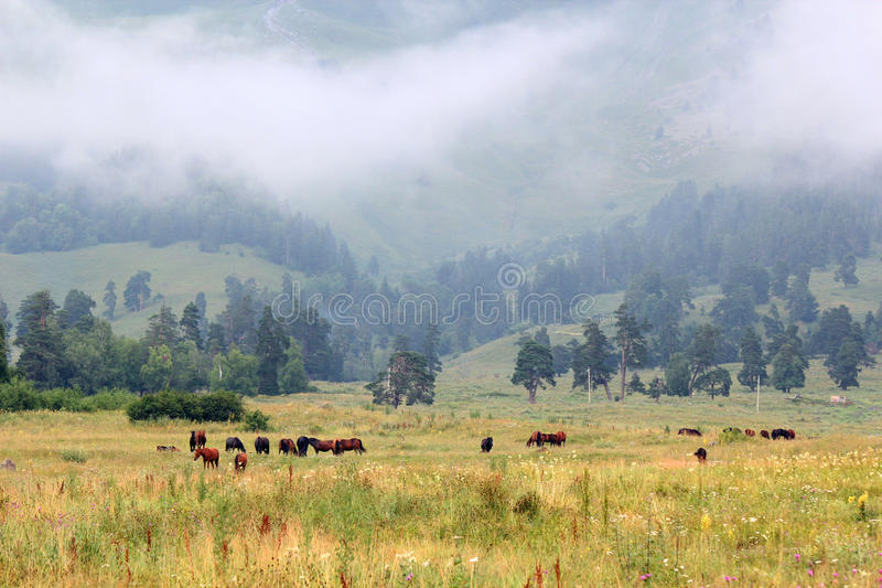 Troupeau de chevaux dans les montagnes image stock