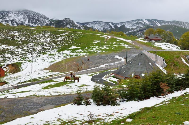 Troupeau de montagnes de chevaux au printemps image libre de droits