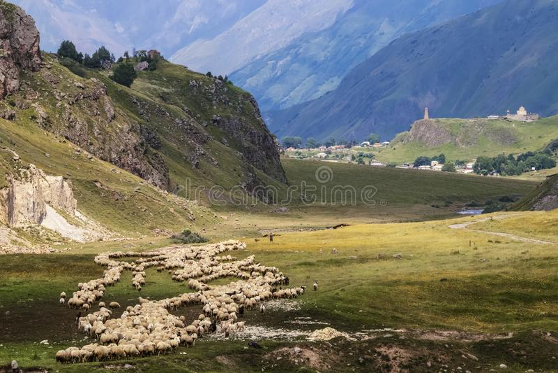 Troupeau de moutons et chèvres frôlant dans les montagnes avec le berger et le chien et l'église et le village enrichis à l'arriè photos stock