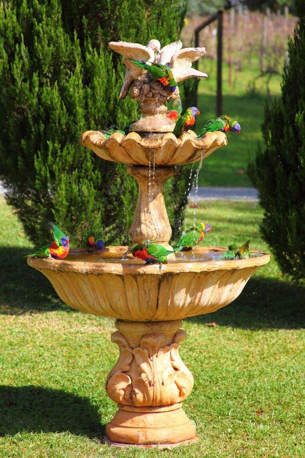 Troupeau de perroquet dans la fontaine images libres de droits