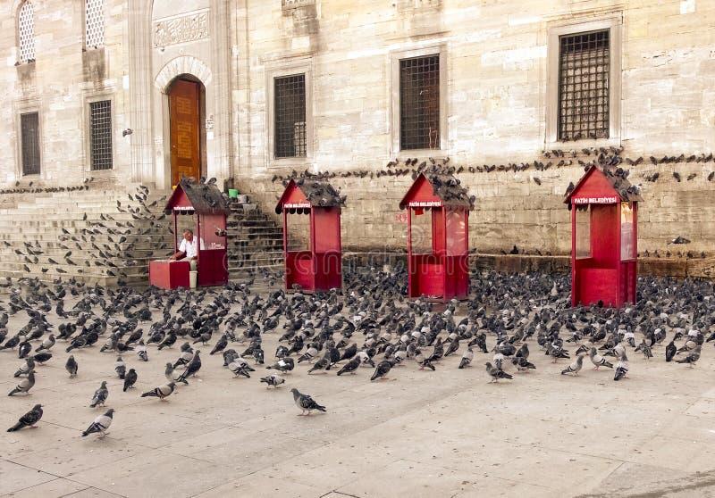 Troupeau de pigeon images libres de droits