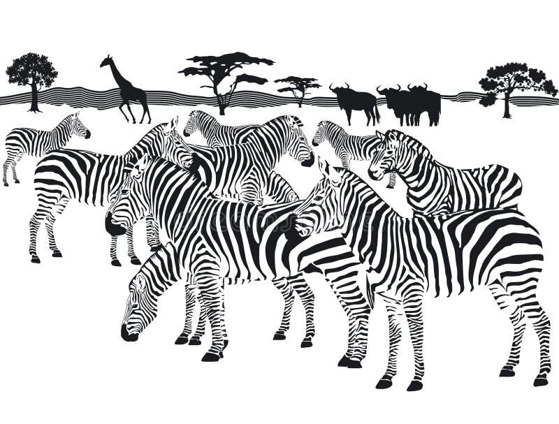 Troupeau de zèbres illustration stock