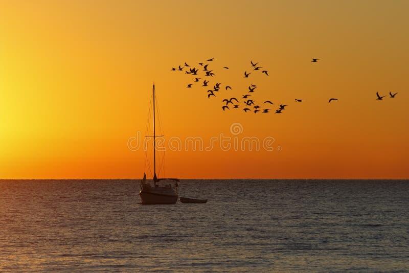 Troupeau des oiseaux marins et de voilier au lever de soleil - la Floride images libres de droits