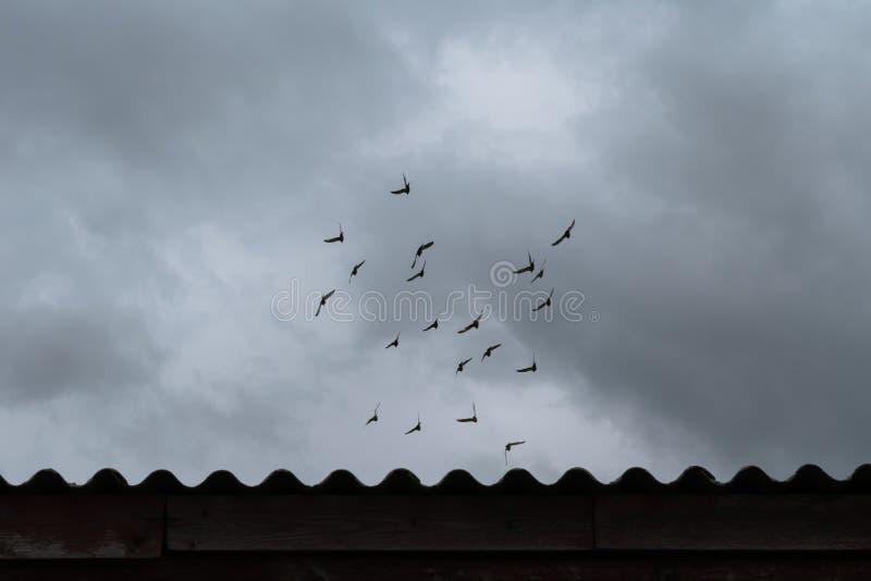 Troupeau des pigeons de vol sous le ciel dramatique image stock