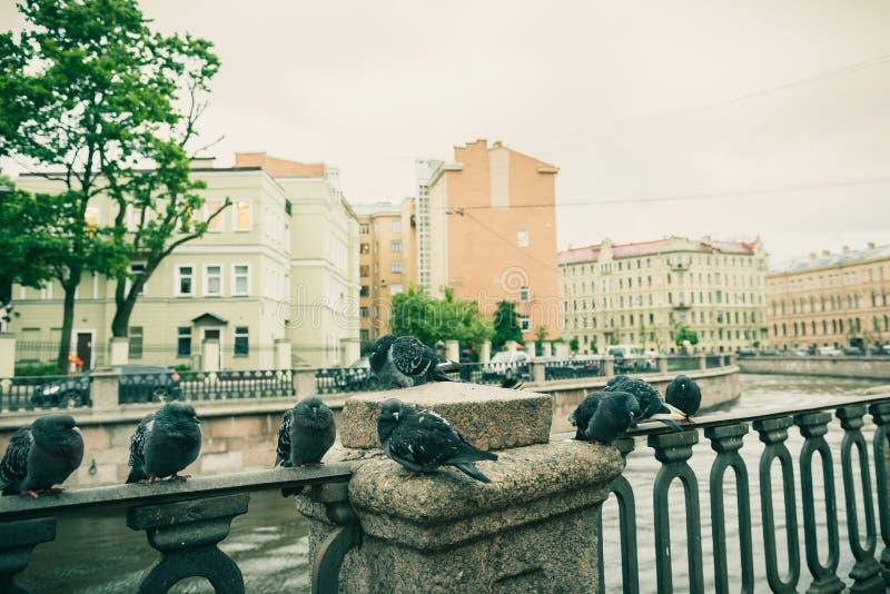 troupeau des pigeons se reposant sur la rue froide de ville de balustrade de rivière images libres de droits